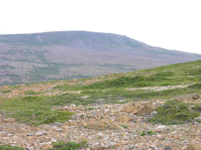 The Serpentine Tablelands of Newfoundland | Forum topic