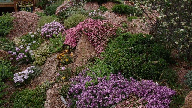 Unlikely combosbining plants in the rock garden – Rock Garden Plants