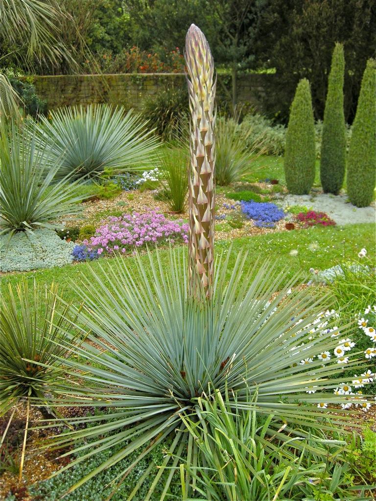 Sementes yucca whipplei palmeira planta flor p mudas r 6 90 em mercado livre - Yucca elephantipes cuidados ...