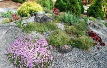 Whittemore Garden